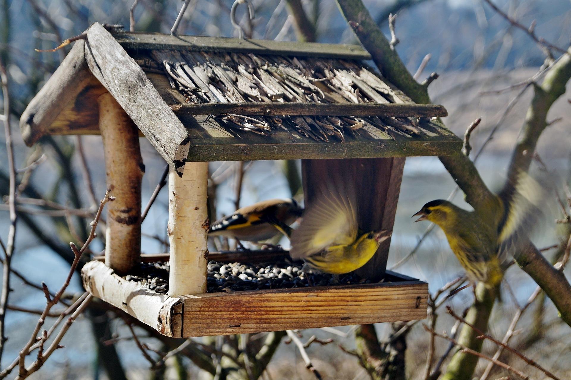 сознания картинки птичьих кормушек авторы