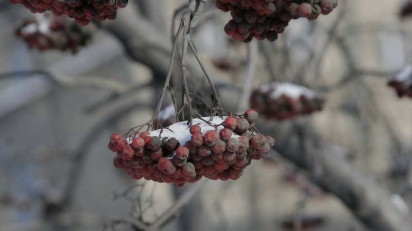 Ввоскресенье Петербургу обещают мокрый снег
