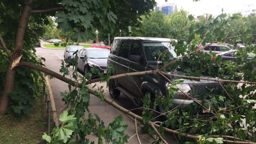Ветер вПетербурге: дерево рухнуло намашину вцентре