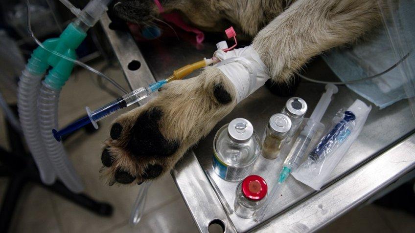 603 бродячих собак чипировали заполгода вПетербурге