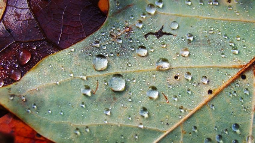 Начало октября вПетербурге окажется дождливым