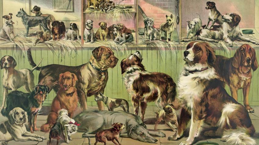 2-х владелиц 63 собак будет судить суд вПетербурге