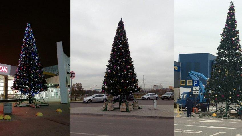 Стало известно, где вПетербурге установили первую новогоднюю елку