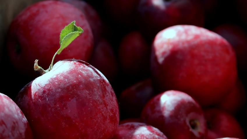 Ленобласть подписала инвестсоглашение на197 млн руб. осоздании плодового сада