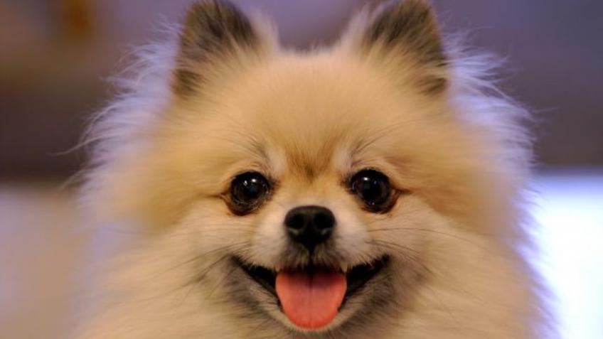 ВЛенинградской области измашины украли декоративную собаку
