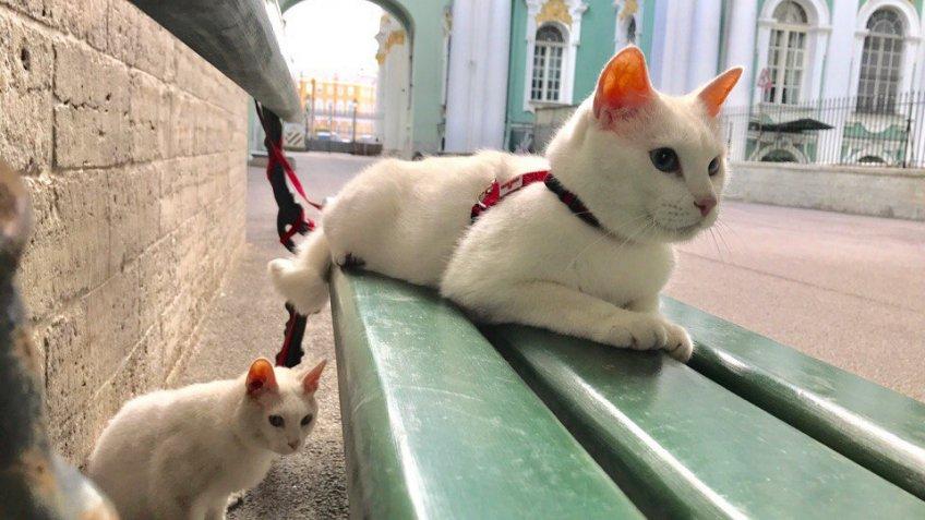 Эрмитажный кот Ахилл предскажет результаты матчейЧМ
