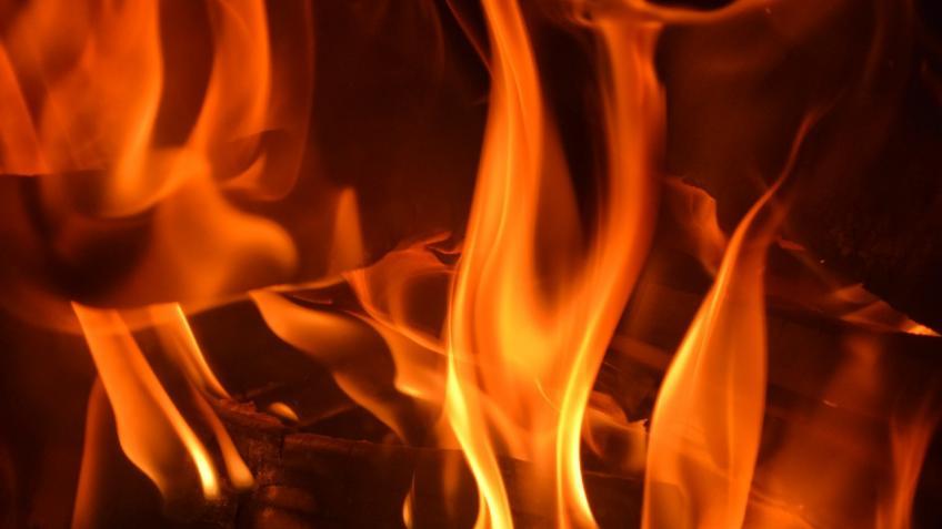 Пожар наконюшне Петербурга: погибли три лошади
