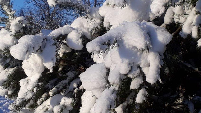 Ссамого начала недели вЛенобласти предполагается мороз
